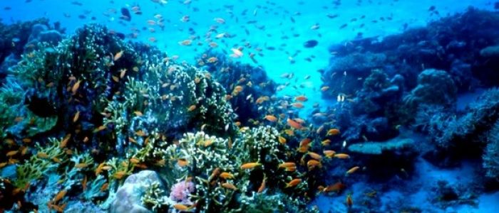 UN Ocean Conference: Algeria makes 8 voluntary commitments to preserving seas, marine resources
